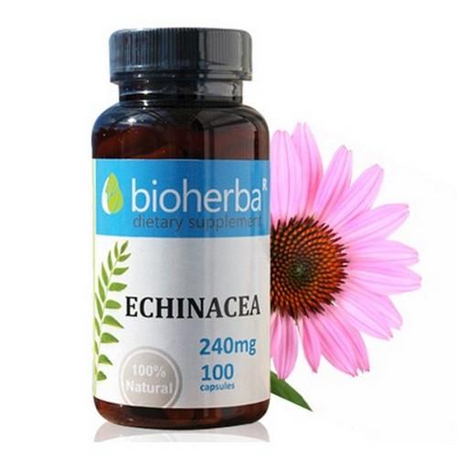 ЕХИНАЦЕЯ (Echinacea ) 240 мг 100 капсули